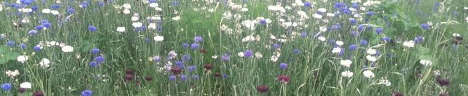 bloemen-bijgesneden1